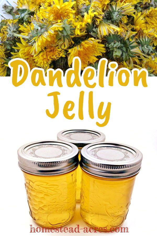 How To Make Dandelion Jelly Recipe In 2020 Dandelion Jelly Dandelion Recipes Wild Food Foraging