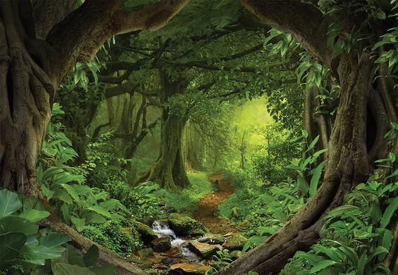 Forest Vinyl Wallpaper Wallpaper Removable Wallpaper Peel Etsy Forest Backdrops Fantasy Forest Magical Forest