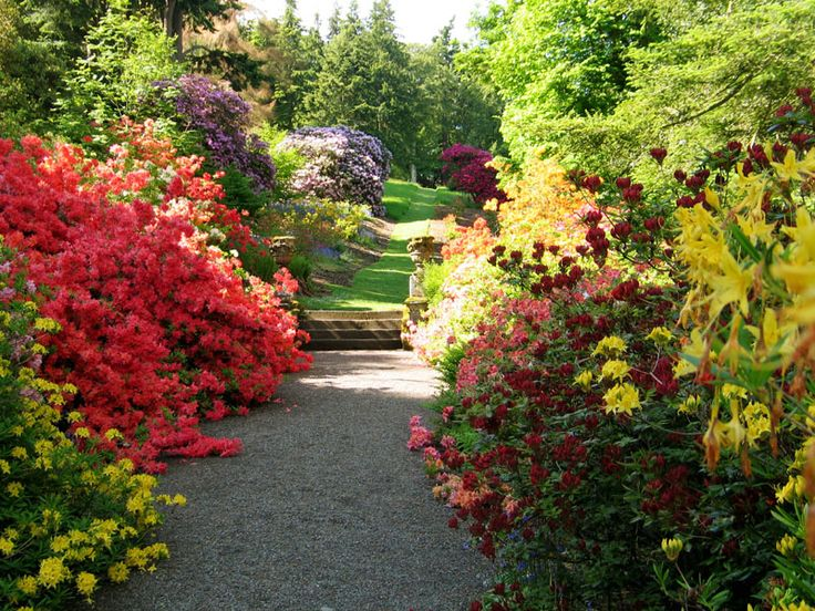 Terrific  Best Images About Scottish Gardens On Pinterest  Gardens  With Luxury Dawyck Botanic Garden  Scotlands Gardens With Alluring Black Garden Netting Also How To Paint Garden Furniture In Addition Capability Brown Gardens And Unusual Gardening Gifts As Well As Mayfield Gardens Additionally The Gardens Care Home Darlington From Pinterestcom With   Luxury  Best Images About Scottish Gardens On Pinterest  Gardens  With Alluring Dawyck Botanic Garden  Scotlands Gardens And Terrific Black Garden Netting Also How To Paint Garden Furniture In Addition Capability Brown Gardens From Pinterestcom