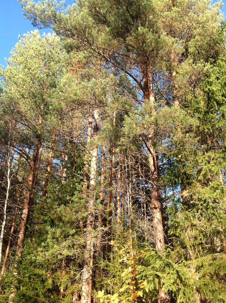 Foresta in Autunno (Return) ~ 30sottozero