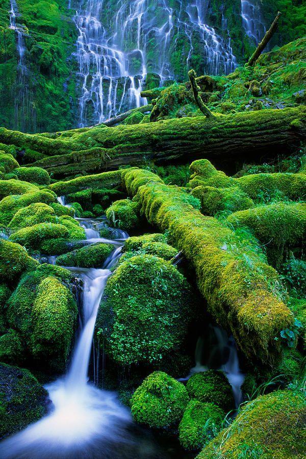 Dolná Proxy Falls v Proxy Falls štátneho parku v púšti Tri sestry - Oregon.