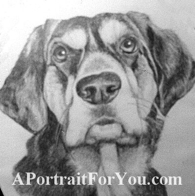 """Preserve the memory of your pet with a beautifully rendered drawing. This is made with graphite on 12"""" x 16"""" acid-free paper. After purchasing please email a high"""
