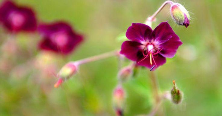 Qual parte da flor contém o estigma e o estilete?. Para as plantas serem capazes de reproduzir, elas precisam produzir sementes. Flores contêm órgãos masculinos e femininos que permitem a produção de sementes. O estigma e estilete são duas partes do sistema reprodutivo das plantas. Essas partes são essenciais, já que permitem que o pólen — carregado para a flor por insetos polinizadores, como ...