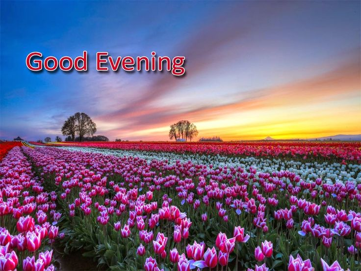 Good Evening With Loving Flowers