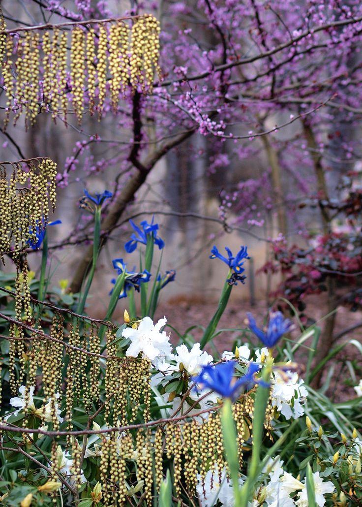 Sydney Botanic Gardens by Rupert et Simon  on 500px