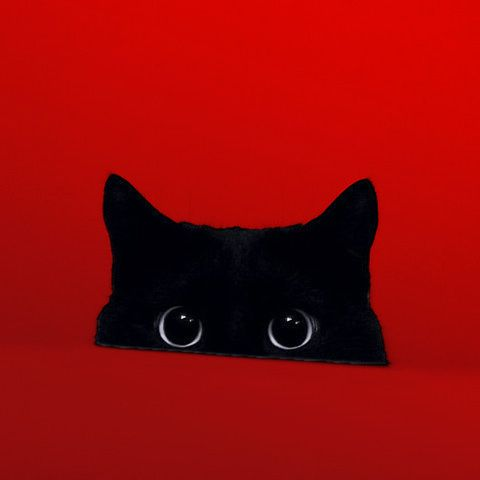 Black Cat on Red
