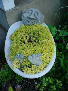 "Sedum ""Ogon"" bubble bath      from:Garden of Discovery: One Man's Junk and Creative Treasures"