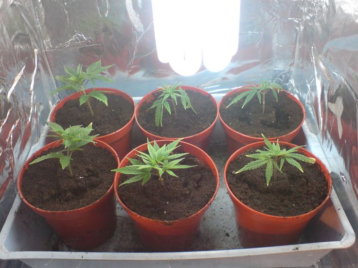 how to grow weed indoors fast easy and cheap