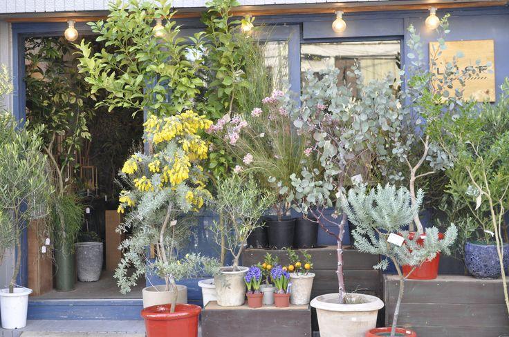 花を飾ることすら躊躇してしまう私たちの毎日 花や緑にあふれたエコでロハスな生活。多少の憧れはあっても、花や観葉植物といった生き物を暮らしに取り入れるのは責任持てるかな…と考えてしまう。そんな中、1年以上枯れない花が飾れる魔法みたいなアイテム、「ハーバリウム」というものがあると知りました。 その生みの親となったフロリスト 上村拓さんが開いた清澄白河にある花屋が「LUFF(ラフ)」。 フロリスト(フローリスト)というのは、草花のプロフェッショナルで、花束づくりやアレンジメントも手掛けます。LUFFジャングルのような花屋という情報もあり、どんな人がお店を開いているのか気になりだします。店主の上村さんは30代で独立を果たしたということ。私たちと同世代で人気の清澄白に自分のお店を出すなんてすごいなあ。 LUFF流気取らず、気負わず。このお店そのものが自己紹介…