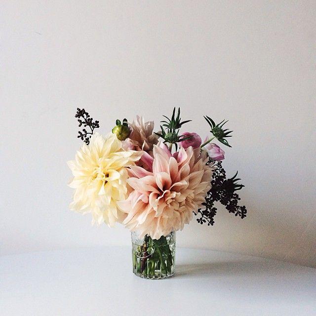 flowers | dahlias