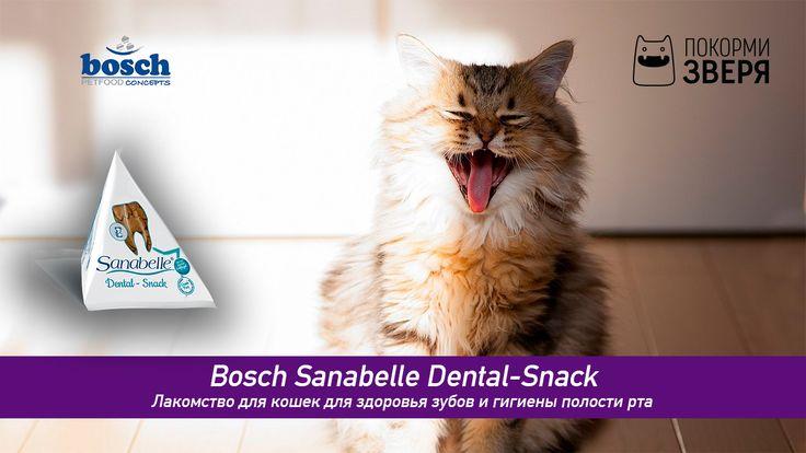 Все любят лакомства, вот и кошки далеко не исключение. Ведь разнообразные вкусности приносят зверю много пользы. Bosch Sanabelle Dental-Snack помогает сохранить здоровье зубов, сделать их крепкими и предотвратить появление зубного камня. #кот #кормдлякошек #покормизверя #bosch