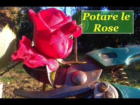 POTARE LE ROSE - YouTube