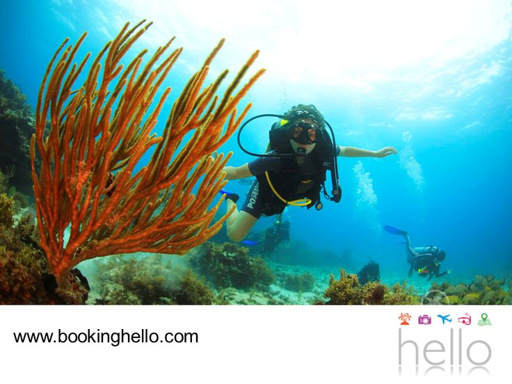 EL MEJOR ALL INCLUSIVE AL CARIBE. El Parque Nacional La Caleta, es el primer parque submarino de República Dominicana y recibe a miles de turistas que desean sumergirse en la experiencia del buceo y contemplar sus arrecifes de coral, donde habitan peces multicolores y una vasta fauna marina. En Booking Hello te invitamos a elegir alguno de nuestros packs all inclusive al Caribe, para planear una visita a este lugar con tus amigos. #bookinghello