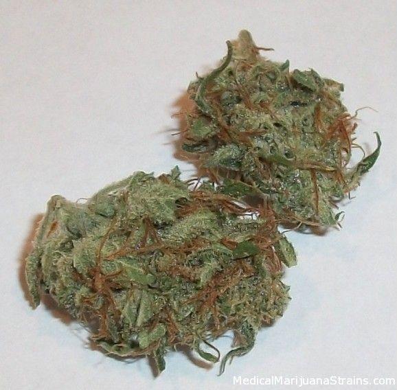 Bubblegum Strain - http://potterest.com/bubblegum-strain
