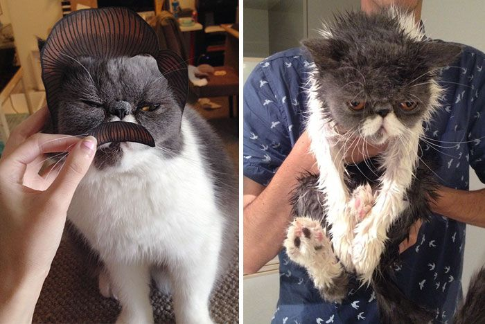 These Before And After A Bath Photos Of Animals Will Help You Get Through A Bad Day
