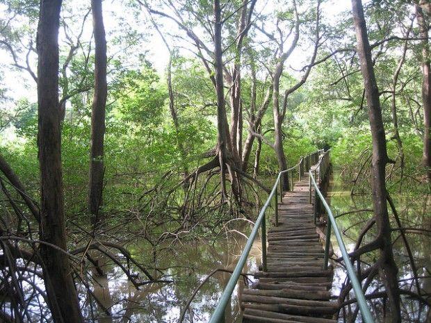 Trail through Nosara Biological Reserve across the mangrove estuary