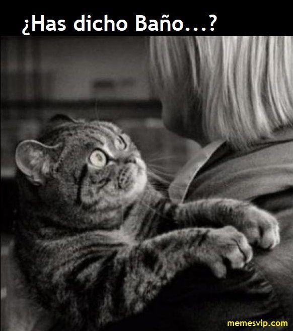 Meme quien dijo miedo #chistes #meme #memes #momos #español #memesenespañol #memesvip #memesvipcom #chistecorto #humor #2017trends #2017 #madrid #barcelona #california #losangeles #mexico #argentina #chicago #sevilla #valencia #newyork #venezuela #colombia  #trending #usa #cat #gato #animals #miedo #fear
