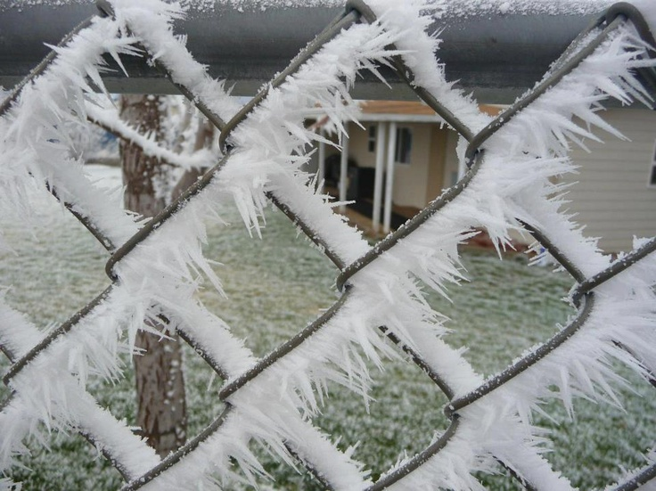 It's called 'rime', caused by a freezing fog