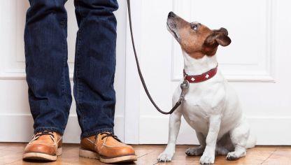 6 pautas para corregir la ansiedad por separación en perros