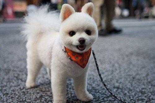 Just a Little Fluff Of a Teddy Pom http://chzb.gr/YNAU3i
