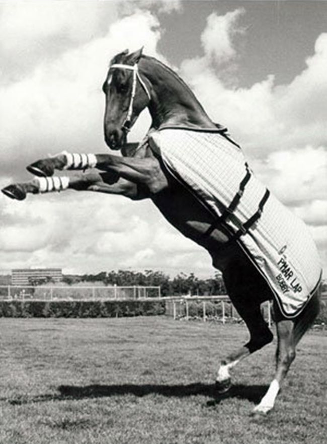 Phar Lap. Bobby an old champ you cant find anything better than him!   The Legend!