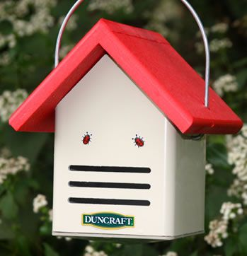Eco-Ladybug House