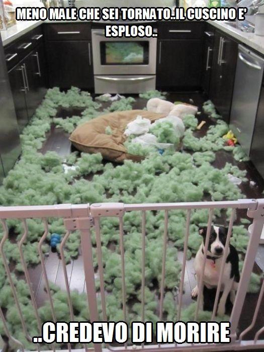 Il cuscino e' esploso..meno male che sei tornato, credevo di morire..