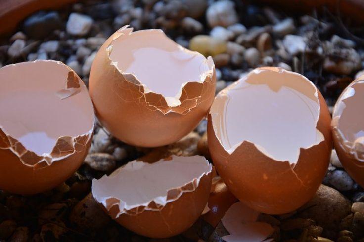 Konzumujte vaječné skořápky: Zmírníte bolesti v kostech a zlepšíte stav vašich nehtů i vlasů - Vitalitis.cz