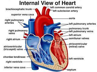 18 Best Heart Disease Images On Pinterest Cardiovascular