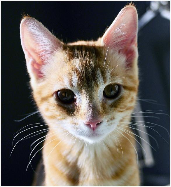 my orange kitten.