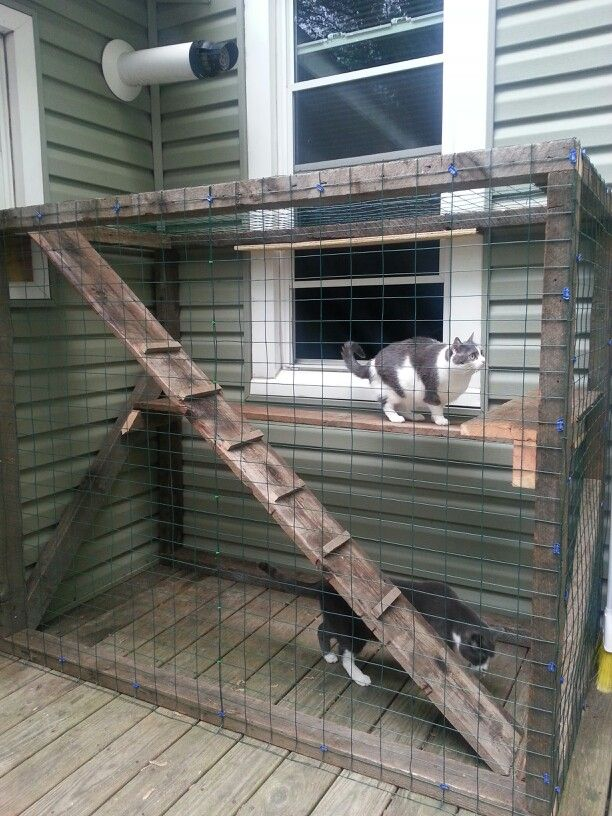 Outdoor Cat Enclosure Diy