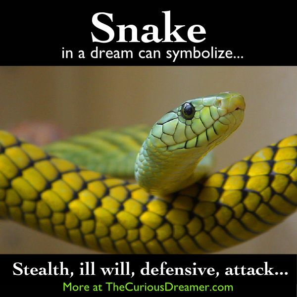 A snake in a dream can symbolize...   More at TheCuriousDreamer.   #DreamSymbol #DreamMeaning