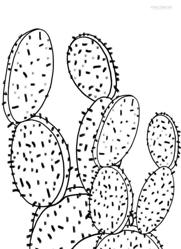 Beautiful Cactus Coloring Pages For Kids In 2020 Flower Coloring