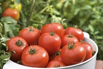 25 best ideas about tomato plants on pinterest tomato - How often to water vegetable garden ...