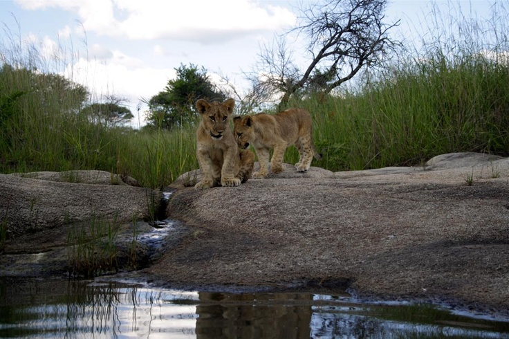 Water world - ALERT | African Lion & Environmental Research Trust