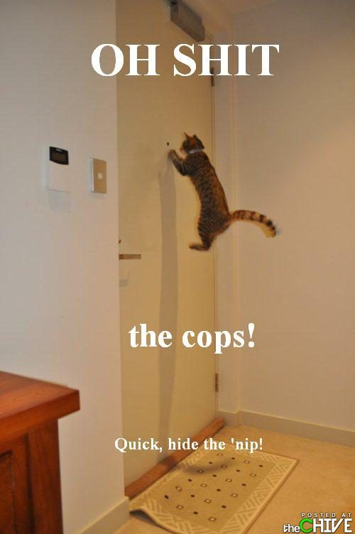 Cops!!: Perfect Time Photo, The Doors, Funny Cat Photo, Funny Pictures, Crazy Animal, Crazy Cat, Knock Knock, Funny Photo, Hello Kitty