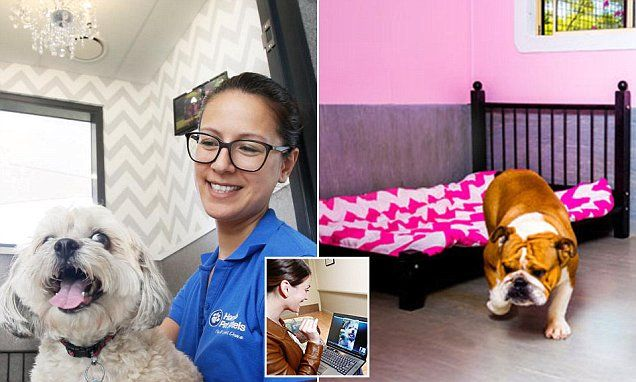 Luxury pet hotel where dogs sleep in private suites with chandeliers