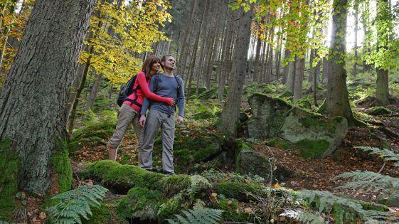 So gesund ist die Mühlviertler Waldluft - #Waldluftbaden im Granithochland. (©OÖ. Tourismus/Röbl)