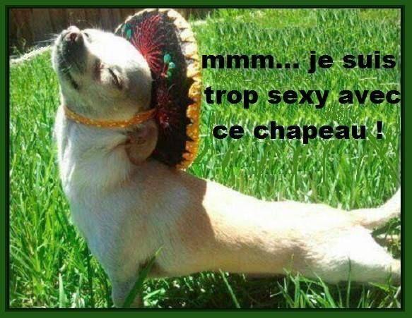 mmm... je suis trop sexy avec ce chapeau !