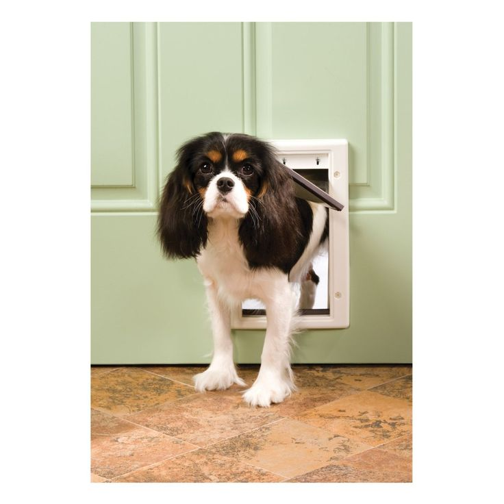 Small Dog Door In The Door Installing Dog Doors Can Be A Good Idea Check more at http://www.wearefound.com/installing-dog-doors-can-be-a-good-idea/