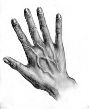 How to Draw Realistic Hands, Draw Hands, Step by Step, Hands, People, FREE Online Drawing Tutorial, Added by catlucker, August 9, 2011, 4:24:33 pm