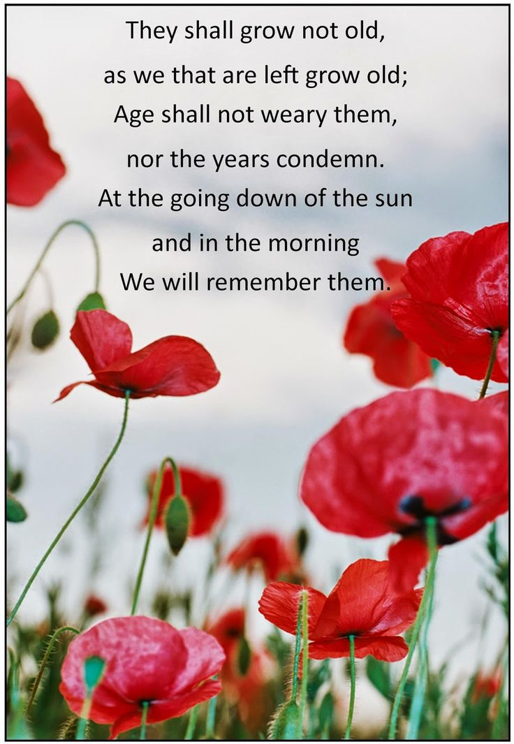 Every Bed of Roses: ANZAC Day - an Ode to the Fallen