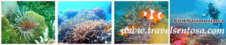 PAKET WISATA INDONESIA | TOUR WISATA MURAH | JELAJAH NUSANTARA | TRAVEL SENTOSA EXPRESS: Eksotisme Karimun Jawa http://www.javatoursurabaya.blogspot.com/