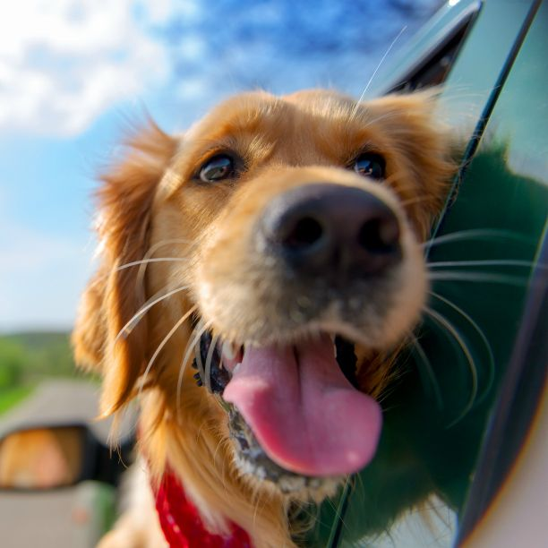 #Welthundetag #hund #tier #buddy