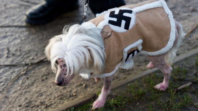 Arme hond krijgt Nazipakje aan | WTF.nl - Blijf je verbazen