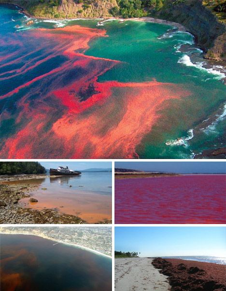 red tides (or algae blooms) - sometimes harmful to marine animals and birds.