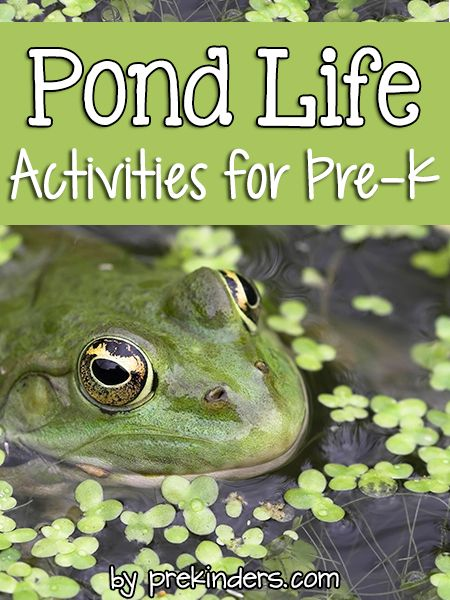 """Pre-K & Preschool theme ideas for learning about pond animals: frogs, turtles, fish. Find more Pond Activities for Pre-K on the category page. Books Check here for a complete list of Books about Pond Animals! Turtle Crawl {Large Motor} Children crawl like a turtle with a """"shell"""" (foam mat or carpet) on their backs, trying not to lose the shell. Frog Hop {Large Motor} Children move from one point to"""