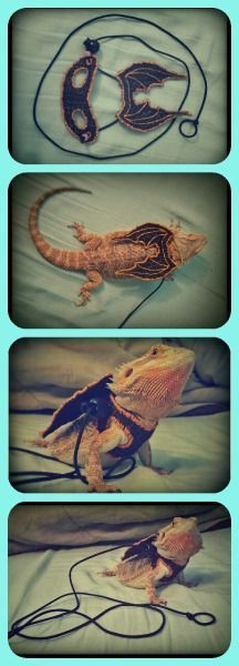 lizard harness | Tumblr