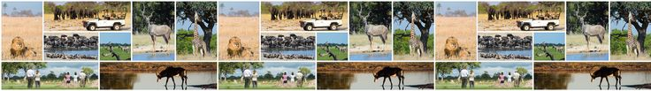 Wildlife at Davison's Camp | Wilderness Safaris
