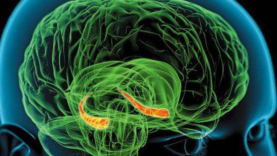 Hipocampo funciones y estructura del órgano de la memoria